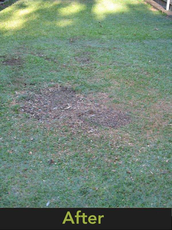 Stump Grinding - A picture of what the tree stump looks like after it has been ground out